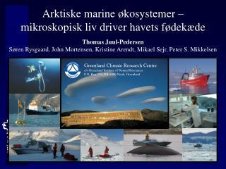 Arktiske marine økosystemer –  mikroskopisk liv driver havets fødekæde Thomas Juul-Pedersen
