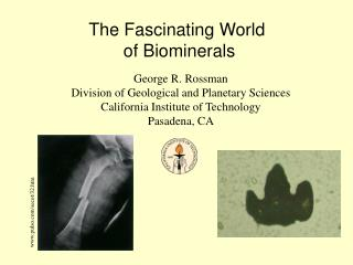 The Fascinating World  of Biominerals