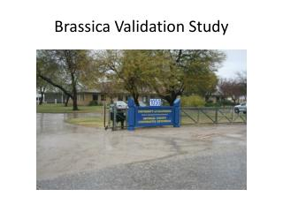 Brassica Validation Study