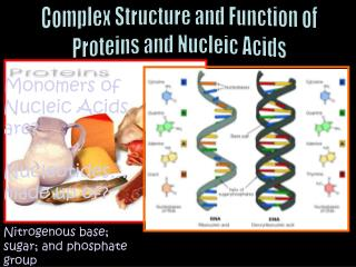 Complex Structure and Function of Proteins and Nucleic Acids