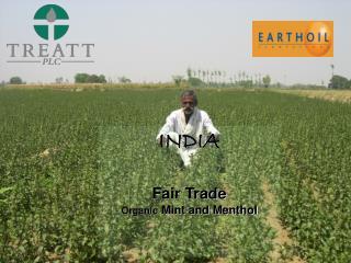 Earthoil Organic Fair Trade Mint