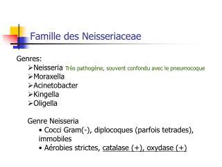 Famille des Neisseriaceae