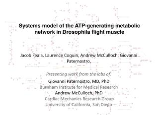 Systems model of the ATP-generating metabolic network in Drosophila flight muscle