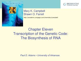 Chapter Eleven Transcription of the Genetic Code:  The Biosynthesis of RNA