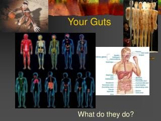 Your Guts