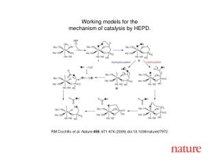 RM Cicchillo  et al. Nature 459 , 871-874 (2009) doi:10.1038/nature07972