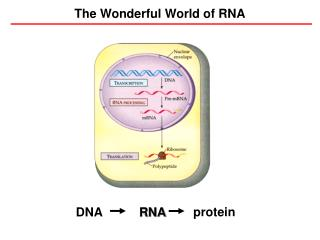 The Wonderful World of RNA