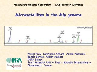 Microsatellites in the  Mlp  genome