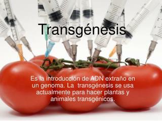 Transg�nesis