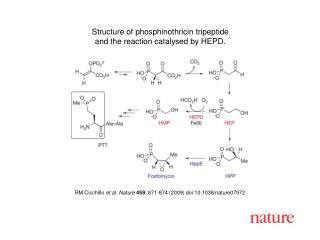RM Cicchillo  et al. Nature 459 , 871-874 (2009) doi:10.1038/nature07972