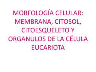 MORFOLOGÍA CELULAR: MEMBRANA, CITOSOL, CITOESQUELETO Y  ORGANULOS DE LA CÉLULA EUCARIOTA