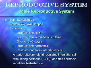 Reproductive System Male Reproductive System