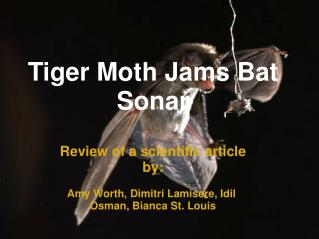 Tiger Moth Jams Bat Sonar
