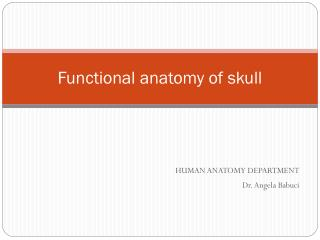 Functional anatomy of skull