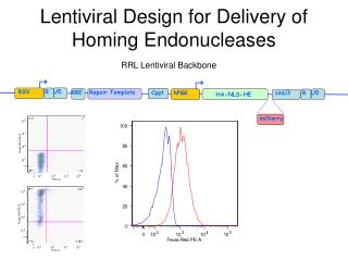 Lentiviral Design for Delivery of Homing Endonucleases