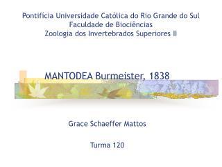 MANTODEA Burmeister, 1838 Grace Schaeffer Mattos Turma 120