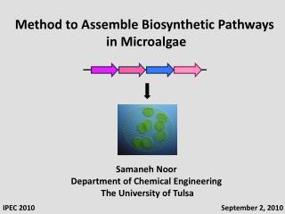 Samaneh Noor Department of Chemical Engineering  The University of Tulsa
