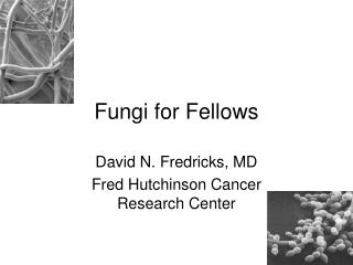 Fungi for Fellows