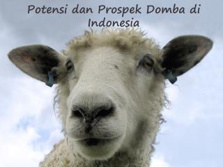 Potensi dan Prospek Domba  di Indonesia