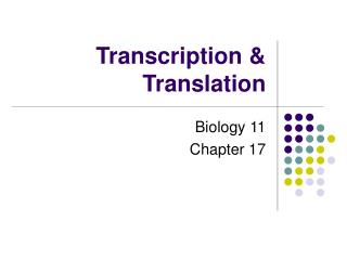 Transcription Regulation in Bacteria