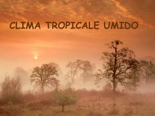 CLIMA TROPICALE UMIDO