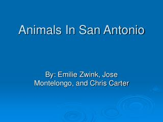 Animals In San Antonio