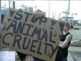 Pet Abuse