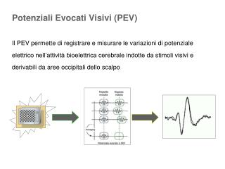 Potenziali Evocati Visivi (PEV)