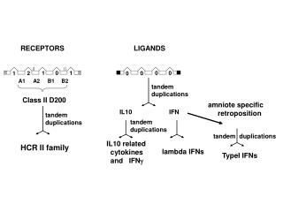 IL10 related    cytokines   and   IFN 