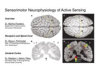 Sensorimotor Neurophysiology of Active Sensing Overview Dr. Martha Flanders