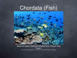 Chordata Fish