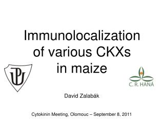 Immunolocalization  of various CKXs  in maize