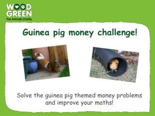Guinea pig money challenge!