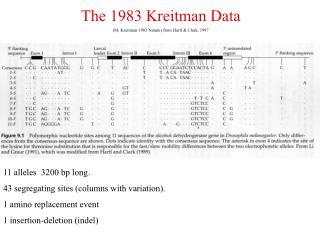 The 1983 Kreitman Data (M. Kreitman 1983 Nature) from Hartl & Clark, 1997