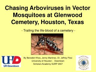 Chasing Arboviruses in Vector Mosquitoes at Glenwood Cemetery, Houston, Texas