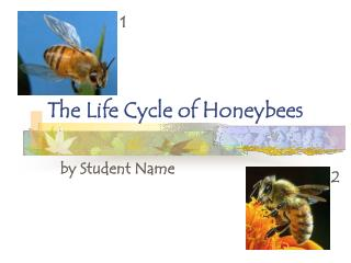 The Life Cycle of Honeybees