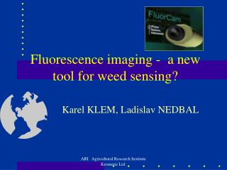 Fluorescence imaging -  a new tool for weed sensing?