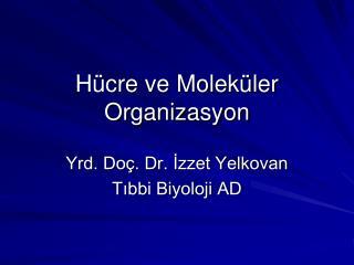 Hücre ve Moleküler Organizasyon