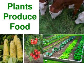 Plants Produce Food