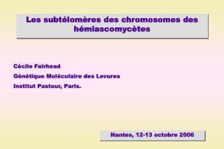 Les subtélomères des chromosomes des hémiascomycètes