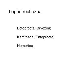 Lophotrochozoa Ectoprocta (Bryozoa) Kamtozoa (Entoprocta) Nemertea