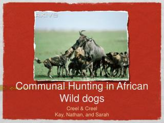 Communal Hunting in African Wild dogs