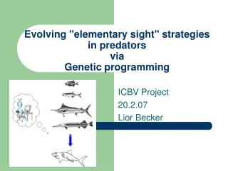 "Evolving ""elementary sight"" strategies in predators via Genetic programming"