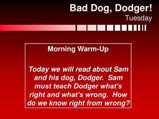 Bad Dog, Dodger! Tuesday