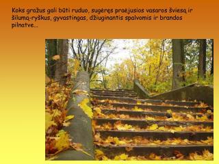 Tad drąsiau ženkime į rudenį  !  