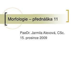Morfologie – p řednáška  11