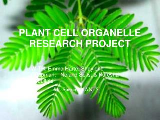 PLANT CELL ORGANELLE RESEARCH PROJECT