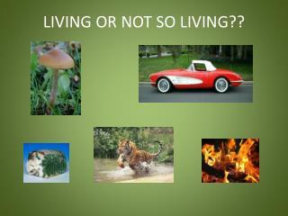 LIVING OR NOT SO LIVING??