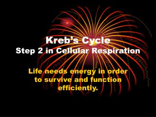 Kreb's Cycle Step 2 in Cellular Respiration