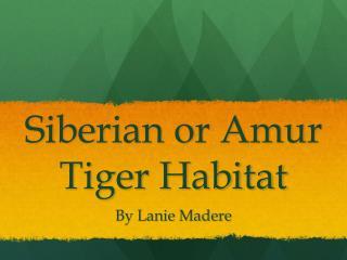 Siberian  or Amur Tiger Habitat